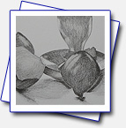 format A3; Pencil: Still-life, took me 3 hours to draw it at http://www.ziveateliery.sk/